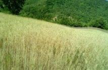 Campo-coltivato_01
