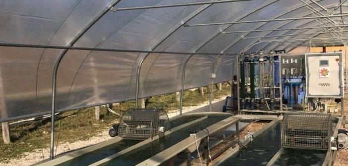Chiusdino. Geotermia: Alga spirulina, risultati positivi per la prima parte della sperimentazione