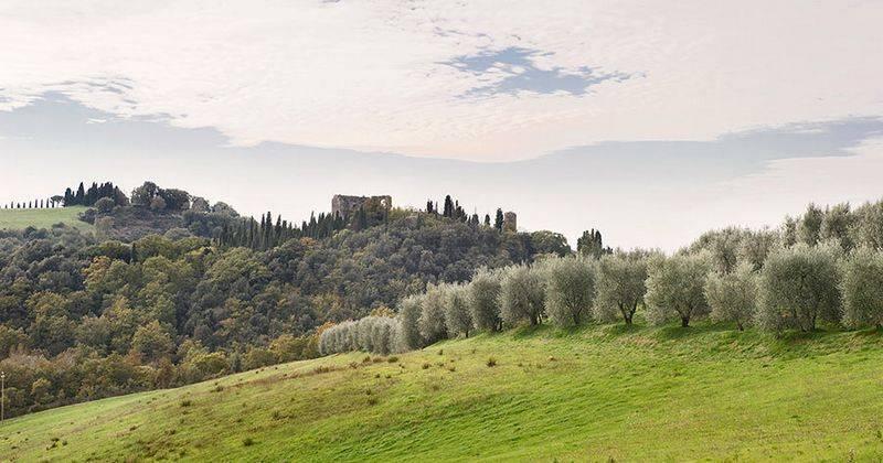 Olivi a Trequanda - foto ripresa da palazzoravizza.it
