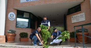 Carabinieri_Sequestro_piante_Cannabis_01